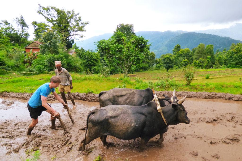 Farming in Nepal